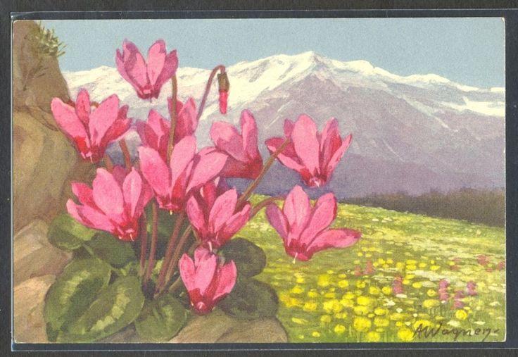 PA064 a/s WAGNER MOUNTAINS FLOWERS CYCLAMEN  Fine LITHO