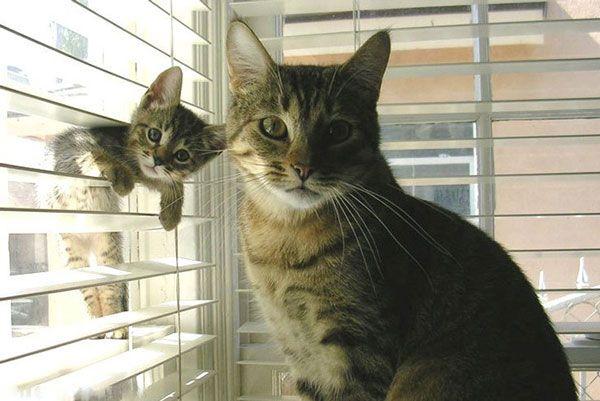 diaforetiko.gr : gatakini2 Γάτες ποζάρουν με τα ολόιδια μωρά τους!