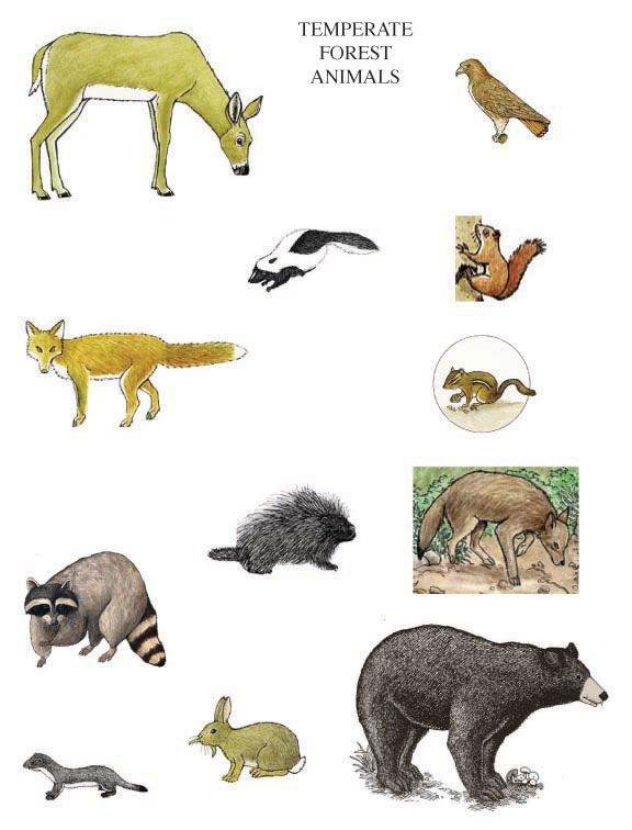 great habitat picture sort activity teaching ideas pinterest activities animal habitats. Black Bedroom Furniture Sets. Home Design Ideas