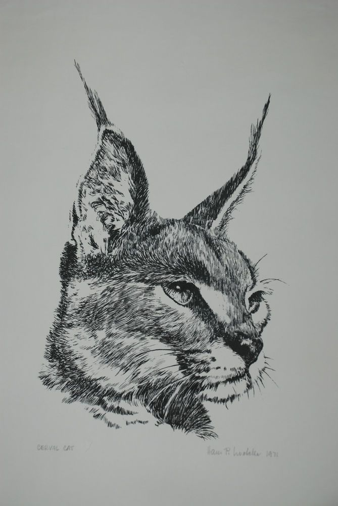 Lithograph of Cerval Cat Signed by Hans P. Luetcke 1971 #Realism