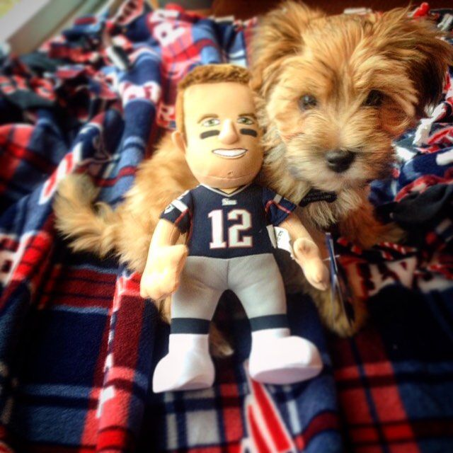 Everyone's favorite day of the week, #TomBradyThursday! That's what #tbt stands for right? 🐶🏉