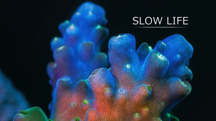 """Slow Life. """"Slow"""" marine animals show their secret life under high magnification. Corals and sponges are very mobile creatures, but their mo..."""