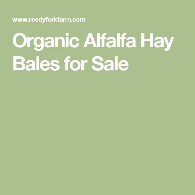 Organic Alfalfa Hay Bales for Sale