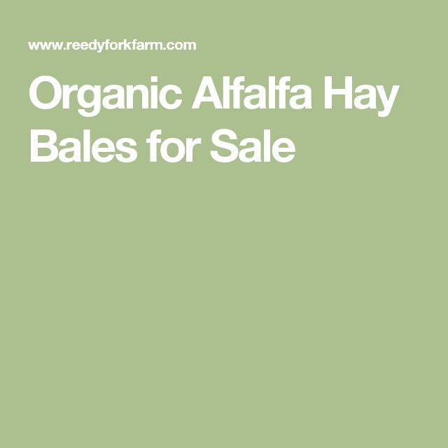 Organic Alfalfa Hay Bales for Sale