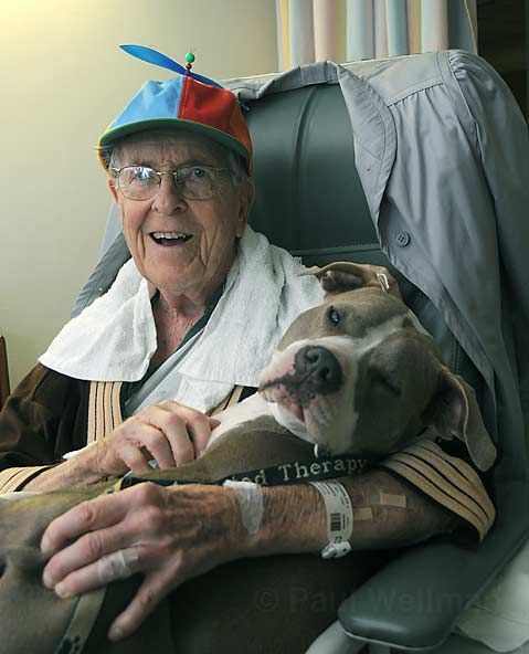 Sweet ---  Daisy Mae, another former dogfighting dog who cuddles with the elderly and frail, and even allows small children to hold her tight when they are undergoing painful medical procedures.