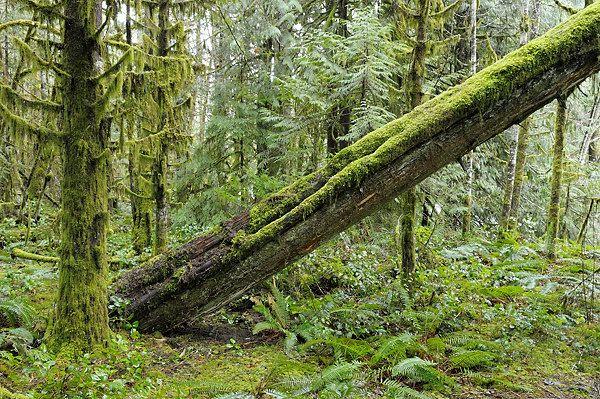 Cowichan River Provincial Park, Vancouver Island, BC.