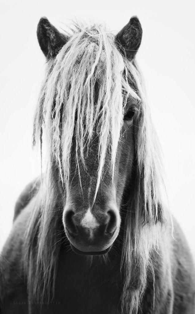 Es sieht aus als würde das Pferd einen beobachten