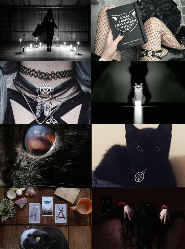 "Animal Witch Aesthetics // Cat Witch ""Requested "" Bird Witch 
