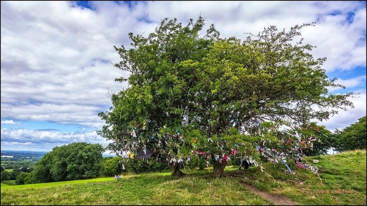 Wishing Trees of Tara Hill