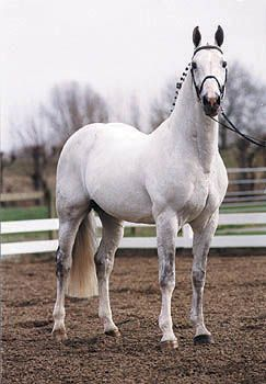 Democraat, KWPN, Dutch Warmblood stallion, Superior Equine Sires