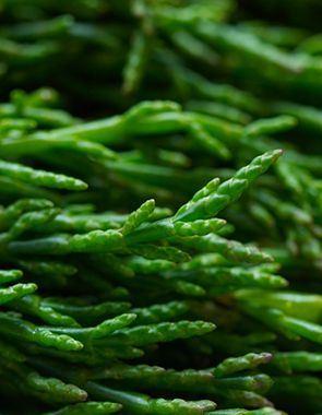 samphire- best greens i have ever had!!