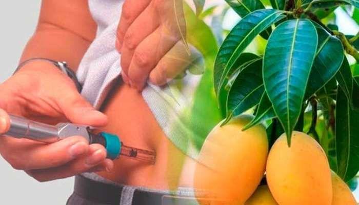 Si eres diabética hierve 20 hojas tiernas de esta mata y resuelve tu diabetes sin insulina o pastillas