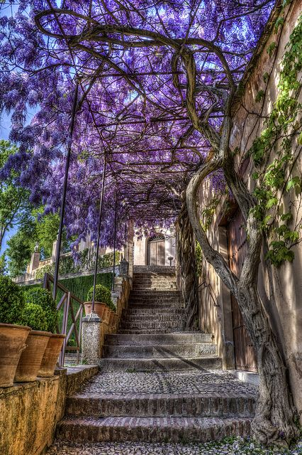 Stairway in the beautiful Generalife Gardens, Granada / Spain (by Warren Bodnaruk). The beautiful Generalife gardens reside above the Alhambra in Granada, Spain. The Generalife was built in the 13th century and it occupies the slopes of the Hill of the Sun (Cerro del Sol), from which there is a complete view over the city and the valleys of the rivers Genil and Darro. Definitely the most extravagant and beautiful gardens I've ever seen!