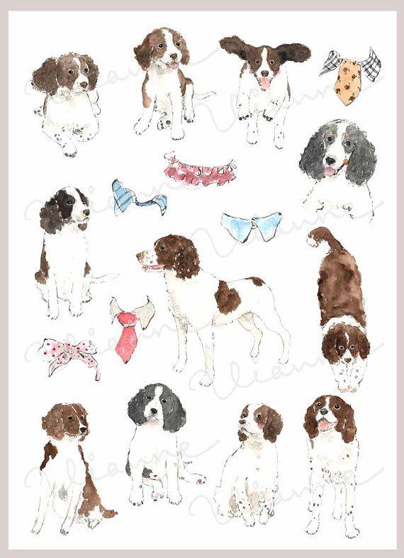 CLIP ART Watercolor English Springer Spaniel & Collar by Vianneart