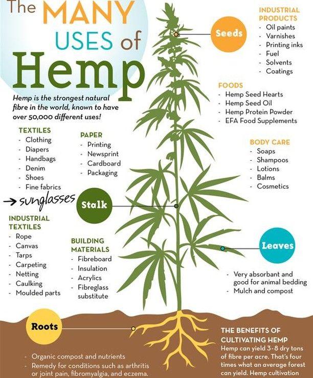 hempforthewin! @hempcan | Herbal Garden & Medicinals | Cbd