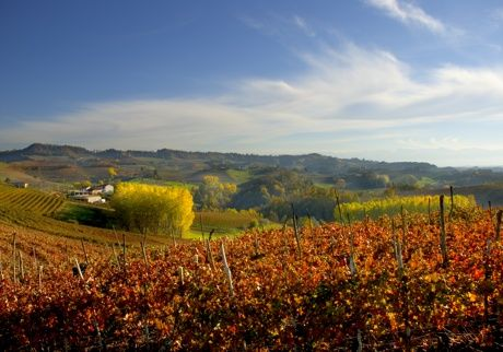 Barolo and surroundings #hills #provinciadicuneo #piemonte #italy