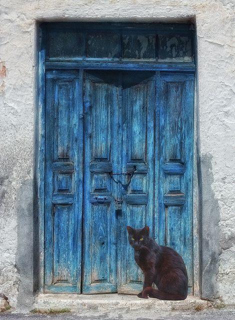Blue Door Guardian. Beautiful black cat.
