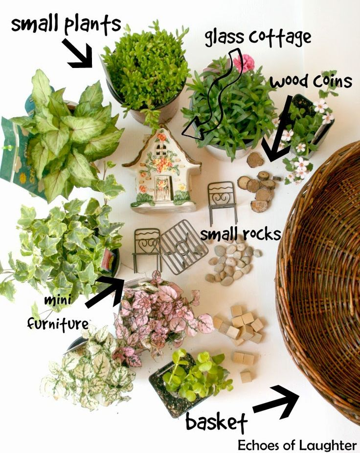 How to make a fairy garden 4 other fabulous outdoor Fairy garden plants