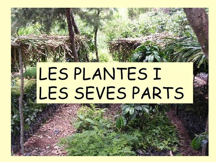 les plantes i les seves parts