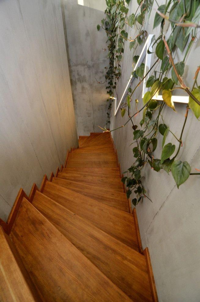Fa növekszik az örökpanorámás WhitePages iroda szívében