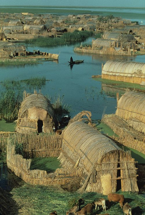 "Iraqi reed house neighborhood, built on a marsh.""They made columns from the thick, giant rushes and gather 30-40 of them together to make pillars, and interweave them for a skeleton frame. They added reed mats, and even the decoration on the front of the homes is fancy lattice work made of the reeds. There's no glass, no nails, no wood."" Even the islands the houses rest on are made of compacted mud and rushes."