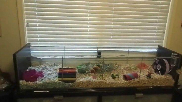 Best Hedgehog Cages | Best hamster cage!