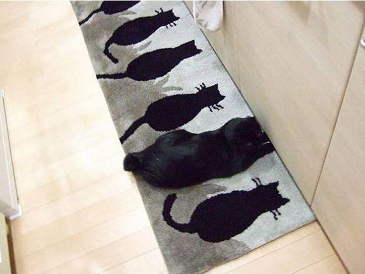 Affascinanti, misteriosi, dispettosi: i gatti sono animali sorprendenti, capaci di mimetizzarsi e di trovare nascondigli originali. Ecco, nella nostra gallery, una selezione di immagini curiose e divertenti. Per sorridere e per mettersi alla prova: dov'è il gatto? (Foto Imgur)