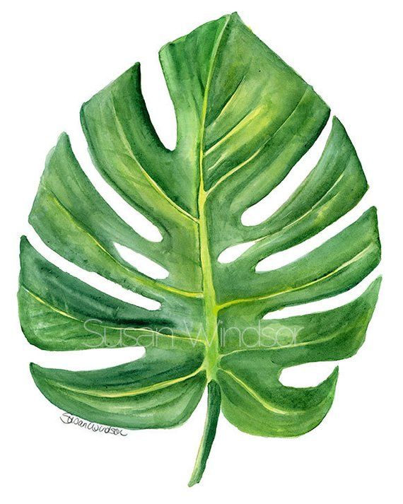 Monstera Leaf Watercolor Painting – 5×7 – Giclee Print Fine Art Botanical Print