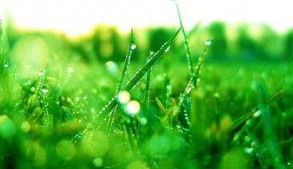 Rain Drop Wallpaper HD Natural Grass 1024x768px Resolution