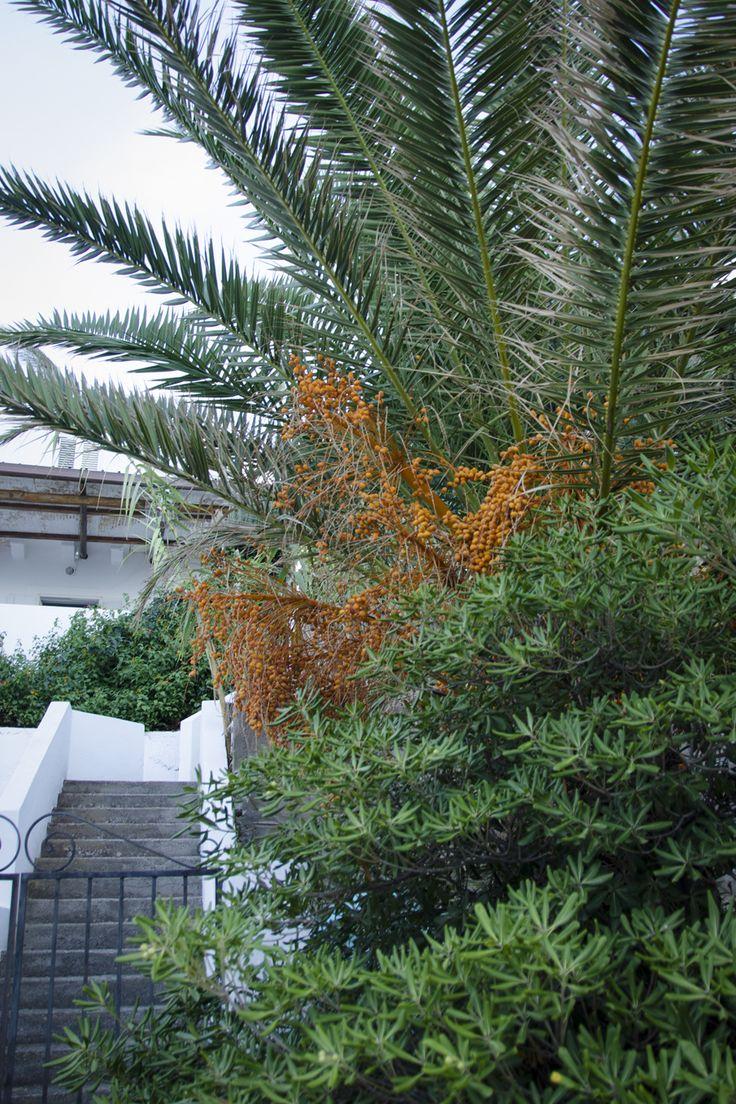 #Stromboli #IsoleEolie #Sicilia #Italia #travel #palm #foolgavolyanskaya