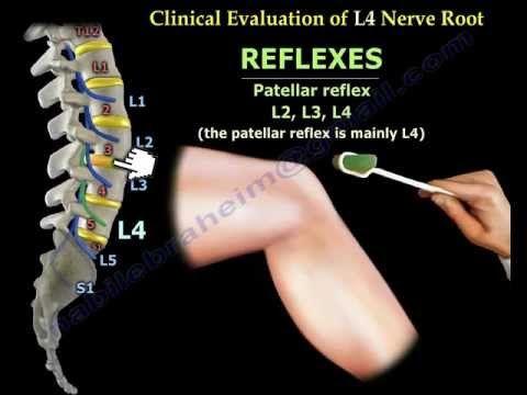25+ melhores ideias de nervo femoral no pinterest | anatomia do, Muscles