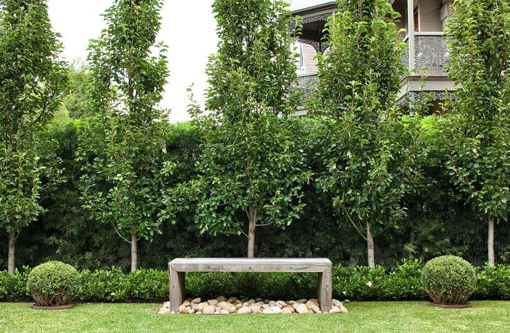 ornamental pear screen with agapanthus - Google Search