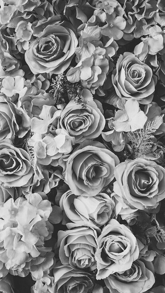 Black And White Roses Wallpaper Amazing Wallpaper Hd Library