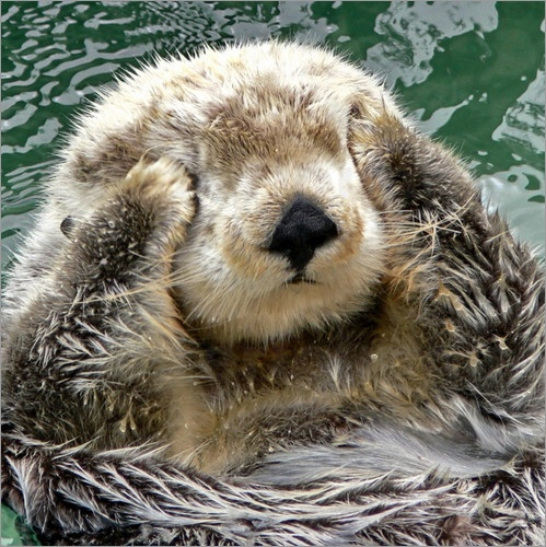 Premium Poster Otter Portrait – Wandbilder mit Tiermotiven