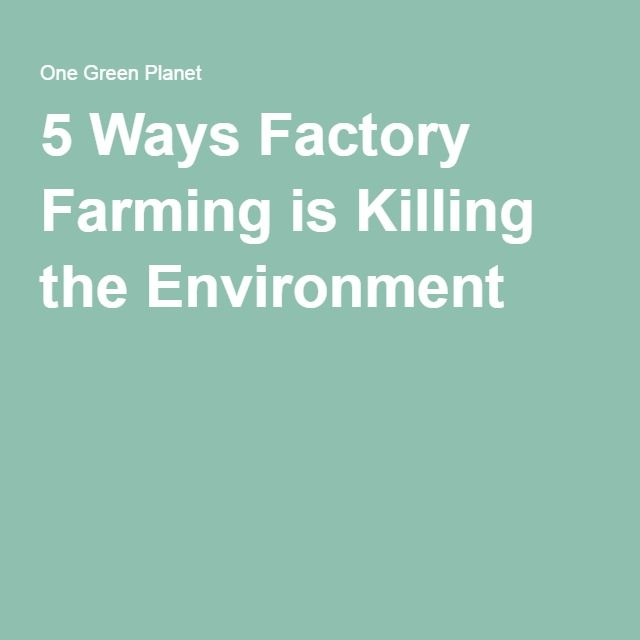 5 Ways Factory Farming is Killing the Environment #endfactoryfarming
