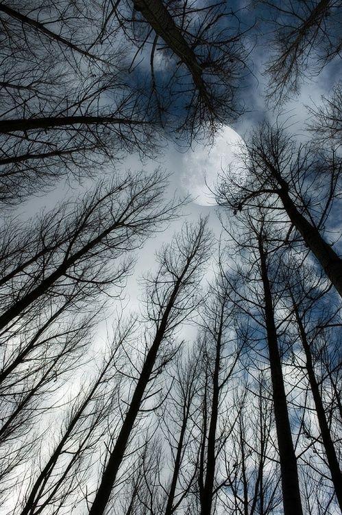 Amazing shot… As the stark limbs reach into the sky toward a powerful moon.