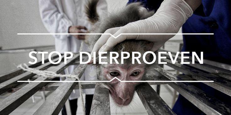 Stop dierproeven