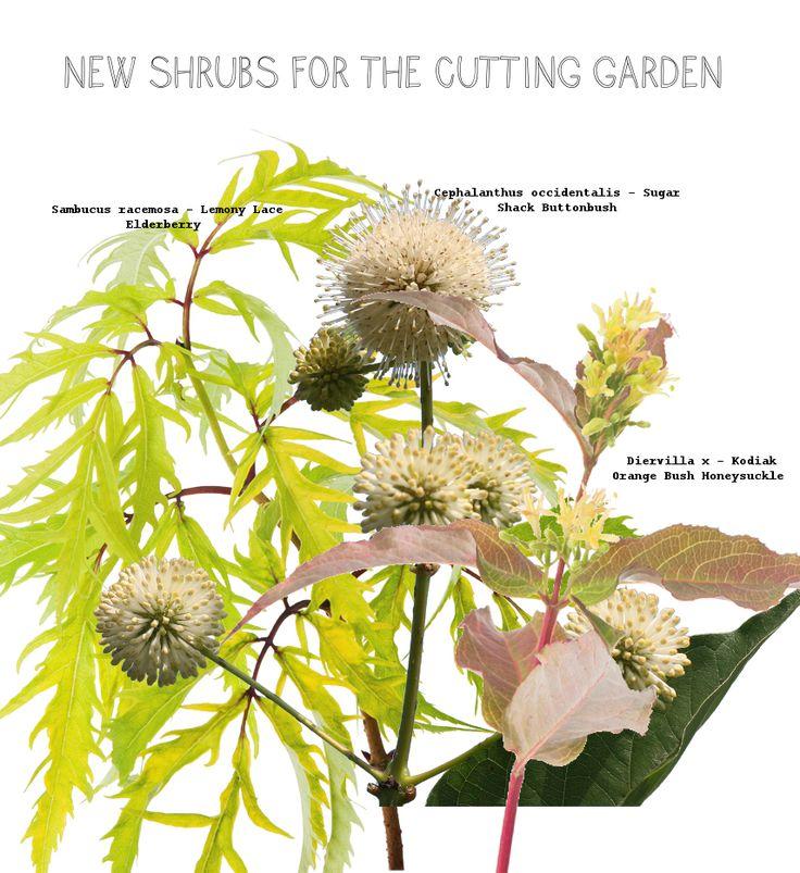 Cutting garden shrubs to add to my garden