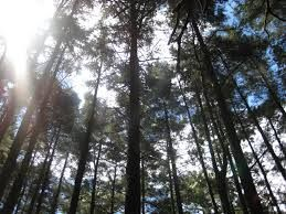 se trata sobre los bosques impresionantes que tiene el parque nacional.