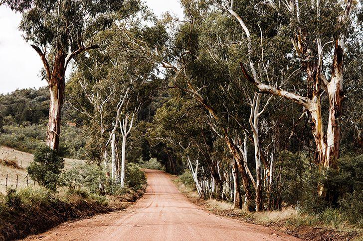 'Howqua Track' Photographic Print © Kara Rosenlund