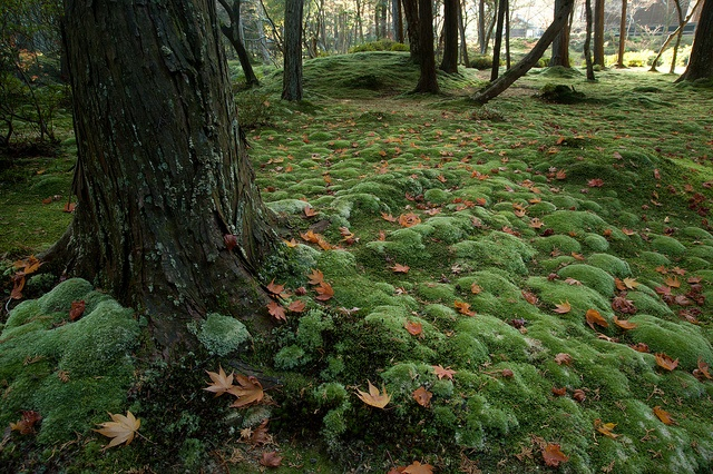 17 Best Images About Moss Gardening On Pinterest Biotechnology Ho