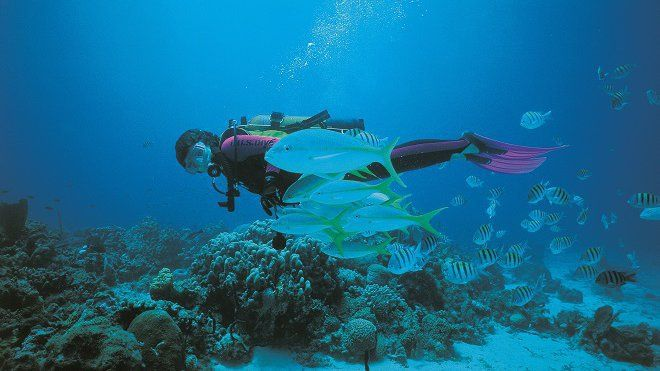 #Du Bataclan à la Guadeloupe, la plongée pour soigner les victimes d'attentats - Outre-mer 1ère: Outre-mer 1ère Du Bataclan à la…