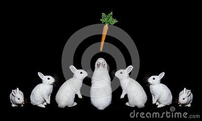 Белые кролики с морковами на черной предпосылке Довольно, пушистый, любимчики - Скачивайте Из Более Чем 58 Миллионов Стоковых Фото, Изображений и Иллюстраций высокого качества. изображение: 90873007