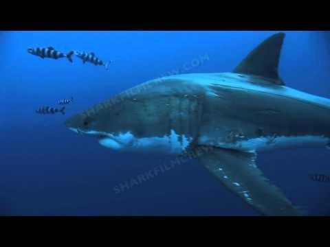 Shark Film Crew at Guadalupe Island
