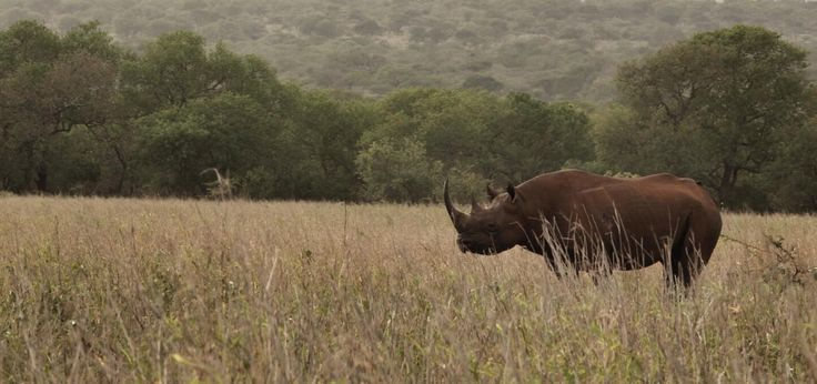Spent yesterday morning with this amazing animal, a true privilege.