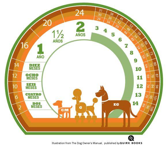 #Calculadora de #edad para #perros, según su tamaño.