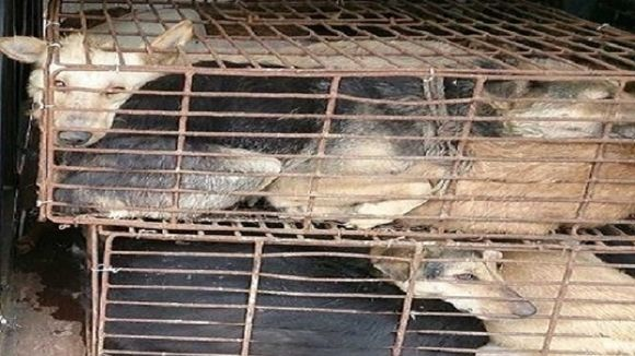 Governor Jerry Brown: Stop the Brutal Dog and Cat Meat Trade in Canton, China.