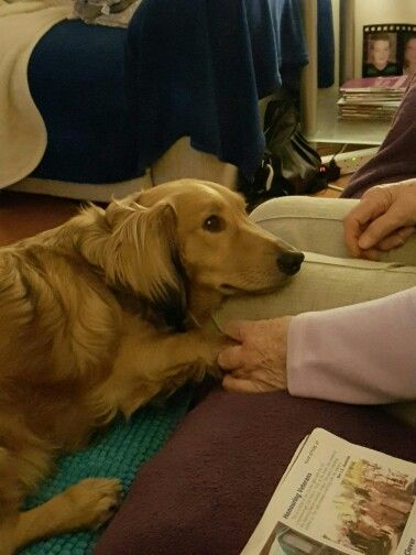 Holding granny's hand love #daxie
