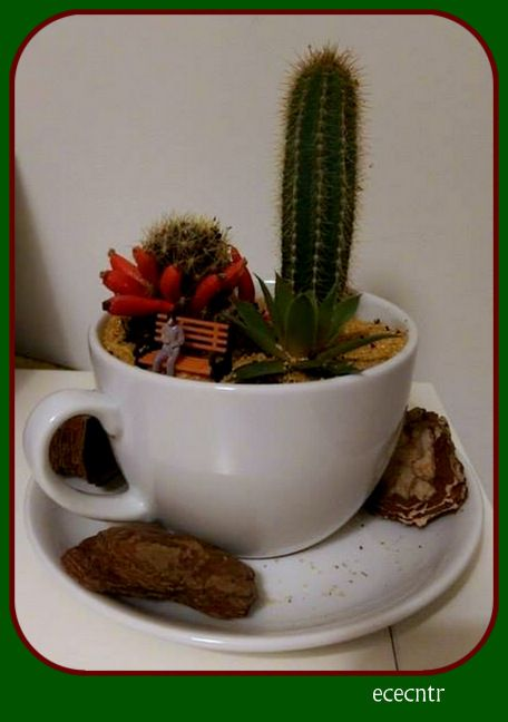 a cup of cactus..we love cactus :)