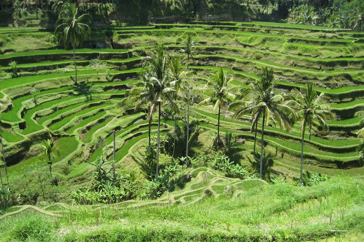 Travel reads lure visitors to Indonesia's dramatic landscapes, such as the rice terraces of Ubud, Bali. Image by Joan Campderros-i-Canas CC BY 2.0